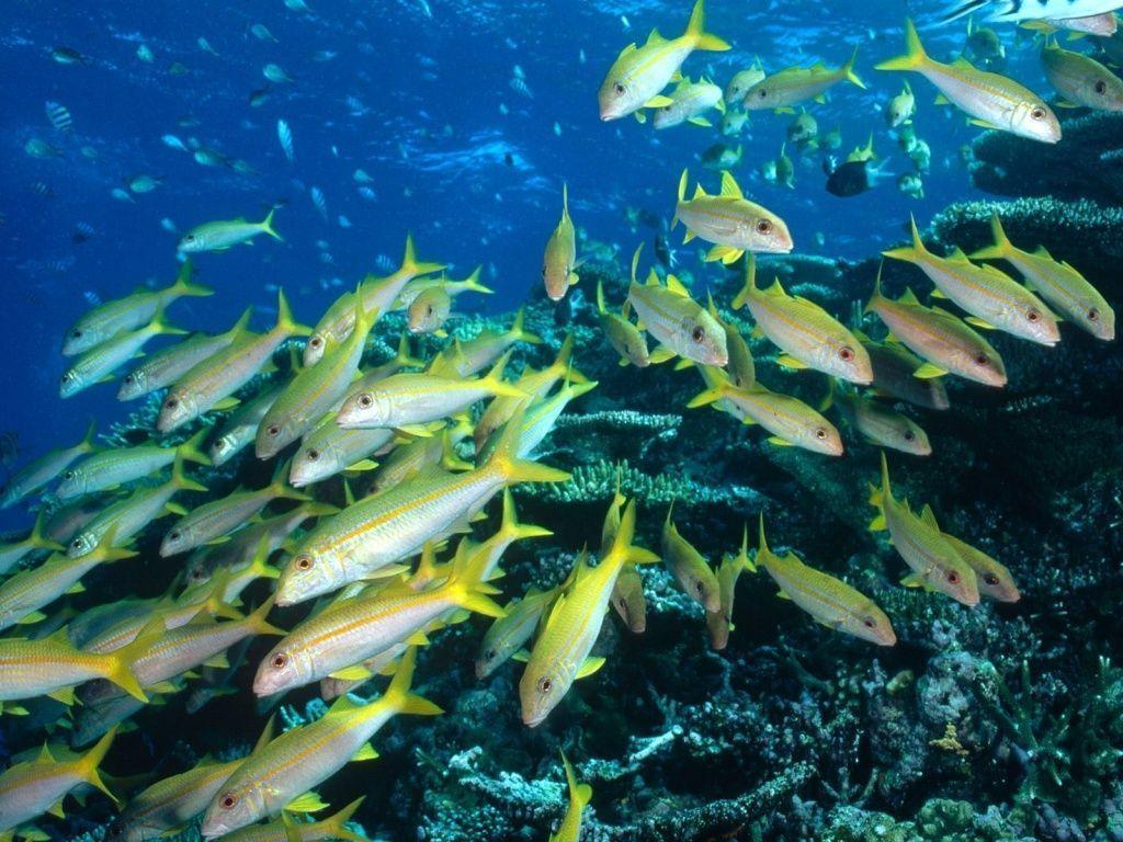 Photos poissonsvenant du net for Peces alimentacion