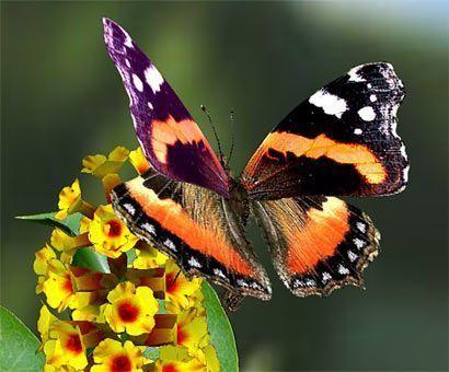 Les papillons mon blog - Image papillon et fleur ...